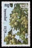 Litchea serie wizerunku ` owoc Egzotyczny ` około 1986 Obraz Stock