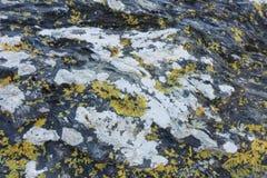 Litchen sur des roches près d'une plage atlantique Photo libre de droits