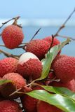 Litchi on the beach. Group of beautiful litchi on the beach Royalty Free Stock Photography