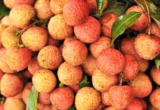 Litchi chinensis Stock Image