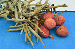 Litchi chinensis Sonn. Royalty Free Stock Image