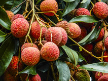 Litchi fruits closeup Royalty Free Stock Photo