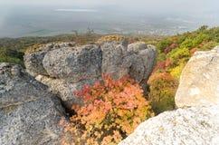 Lite av hösten arkivfoton