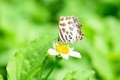 Lite butterly på den vita blomman arkivfoto
