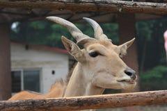 Lite deers Royaltyfri Bild