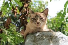 Lite en katt Arkivbilder