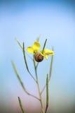 Lite en snail Arkivfoto
