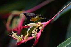 Lite fågel Royaltyfri Foto