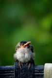 Lite fågel Arkivfoton