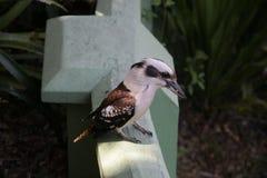 Lite fågel Royaltyfri Bild