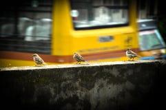 Lite fågel Arkivbild