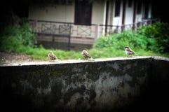 Lite fågel Royaltyfria Foton