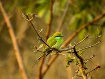 Lite fågelsammanträde på filial royaltyfri bild