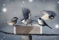 Lite fåglar i vinter Arkivfoton