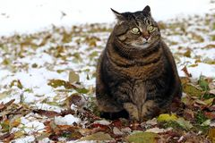 Lite fet katt med en rolig blick royaltyfria bilder