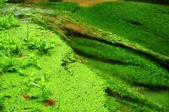 Lite flod Arkivfoto