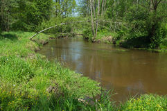 Lite flod Arkivbilder