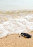 Lite går sköldpaddan hav Arkivbilder