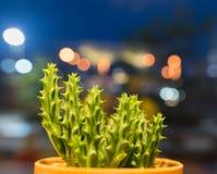 Lite kaktus Royaltyfri Foto