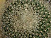 Lite kaktus Arkivfoto