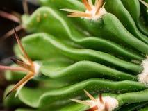 Lite kaktus Arkivbilder