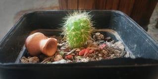 Lite kaktus Arkivbild