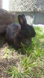 Lite kanin Fotografering för Bildbyråer
