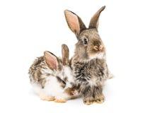 Lite kaniner royaltyfri bild