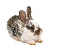 Lite kaniner arkivfoto
