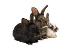 Lite kaniner fotografering för bildbyråer