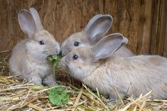 Lite kaniner royaltyfri foto