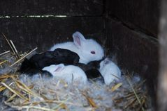 Lite kaniner royaltyfria foton