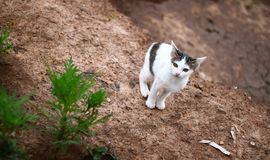 lite kattungar Arkivbild