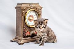 Lite kattunge nära en gammal klocka Det tid för ` s att ha breakfast_ arkivbild