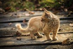 Lite lantlig katt Arkivbilder