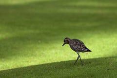 Lite ledsen fågel Fotografering för Bildbyråer