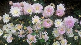 Lite róży kwiat w lesie obraz royalty free