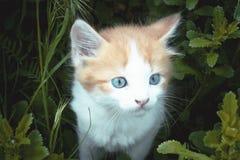 Lite r?d kattunge med lekar f?r bl?a ?gon i gr?set N?rbild arkivbild