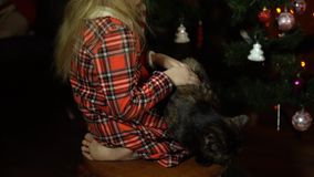 Lite slår flickan ett kattsammanträde på en stol framme av en julgran arkivfilmer