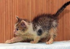 Lite smutsig sjuk kattunge fotografering för bildbyråer