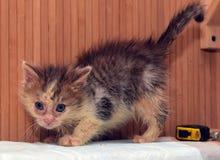 Lite smutsig sjuk kattunge royaltyfri fotografi
