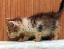 Lite smutsig sjuk kattunge royaltyfri bild
