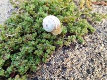 Lite snail royaltyfria foton