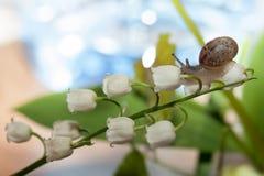 Lite snail Arkivfoto