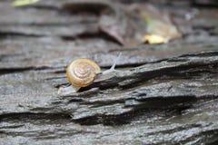Lite snail Royaltyfri Foto