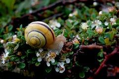 Lite snail Royaltyfria Bilder