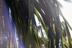 Lite solavbrott till och med sidorna tropisk textur arkivfoto