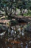 Lite flodinsida den Broceliande skogen Arkivbild