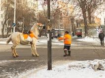 Lite väntar ponnyn arkivfoton