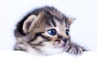 Lite 2 veckor gammal kattunge Arkivfoton